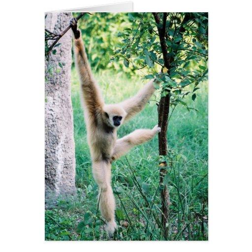 Tarjeta de balanceo del mono