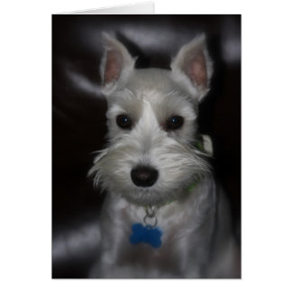 Tarjeta de cara dulce del perrito blanco del Schna