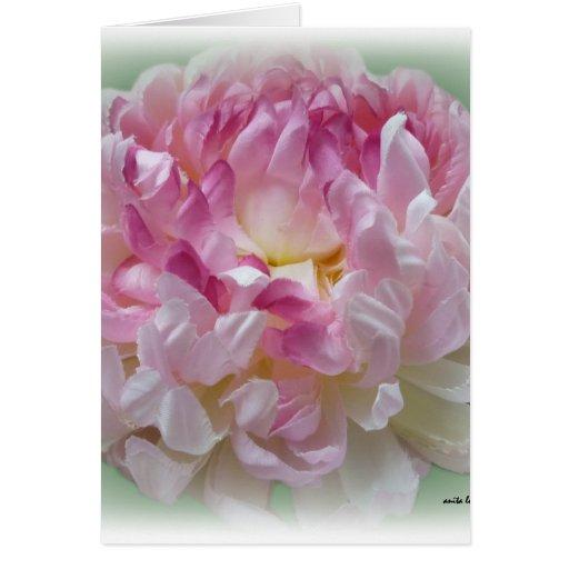 Tarjeta de Chrysantemum