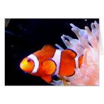 Tarjeta de Clownfish