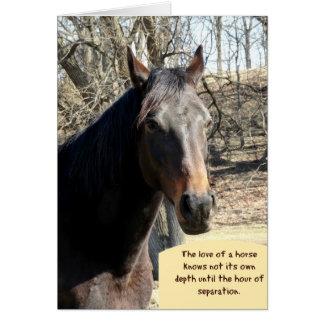 Tarjeta de condolencia del caballo con cita