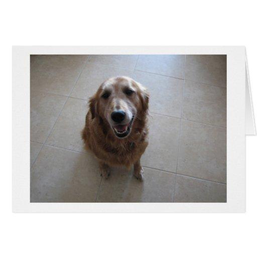 """Tarjeta de condolencia del mascota - """"hembra """""""