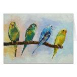 Tarjeta de cuatro Parakeets