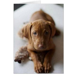 Tarjeta de cumpleaños adorable del perro de