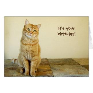 Tarjeta de cumpleaños anaranjada del Tabby