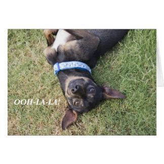 tarjeta de cumpleaños de la chihuahua del Ooh-la-l