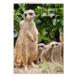 Tarjeta de cumpleaños de la cuadrilla de Meerkat