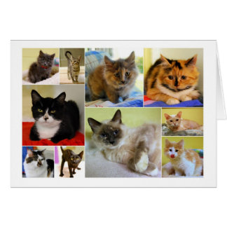 Tarjeta de cumpleaños del collage del gato