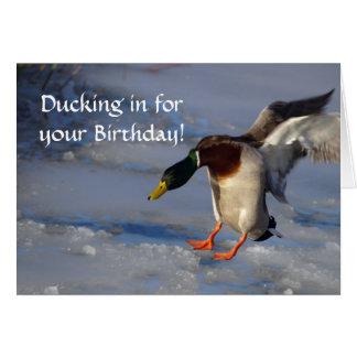 Tarjeta de cumpleaños del pato del pato silvestre