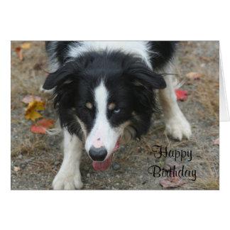 Tarjeta de cumpleaños del perro de la mirada fija