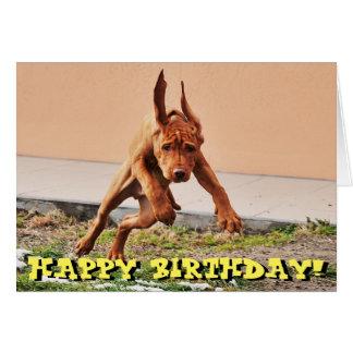 Tarjeta de cumpleaños divertida del perrito del