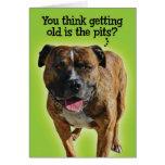 Tarjeta de cumpleaños divertida del pitbull