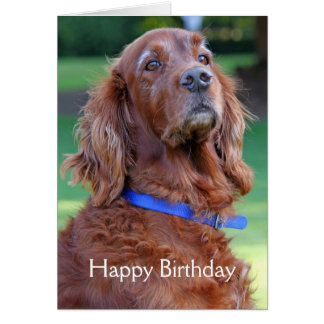 Tarjeta de cumpleaños hermosa de la foto del perro