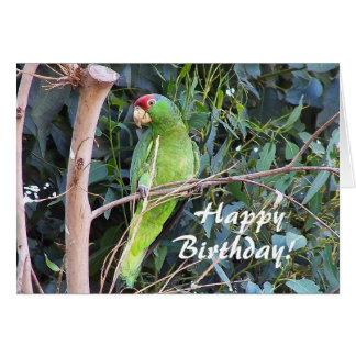 Tarjeta de cumpleaños salvaje del loro