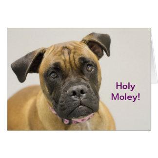 Tarjeta de cumpleaños santa del boxeador de Moley