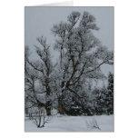 Tarjeta de Eve del invierno