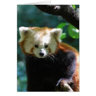 Tarjeta de felicitación adorable de la panda roja