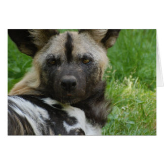 Tarjeta de felicitación africana del perro salvaje