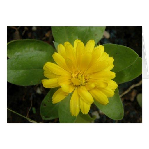 Tarjeta de felicitación amarilla brillante de la m