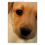 Tarjeta de felicitación amarilla del perrito del l