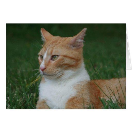 Tarjeta de felicitación anaranjada del Tabby