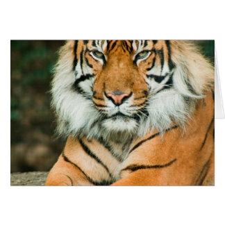 Tarjeta de felicitación anaranjada del tigre