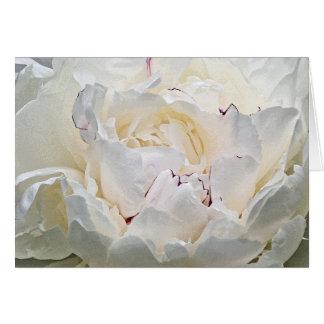 Tarjeta de felicitación blanca de la fotografía de