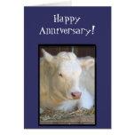 Tarjeta de felicitación blanca de la vaca del aniv