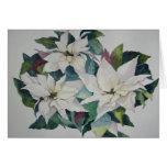 Tarjeta de felicitación blanca de los Poinsettias