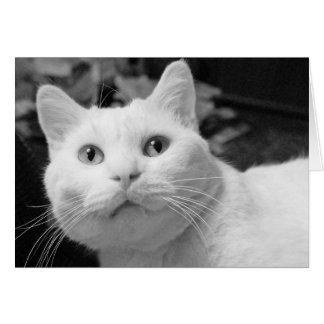 Tarjeta de felicitación blanca del gato para el