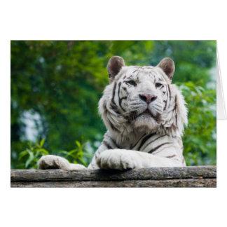 Tarjeta de felicitación blanca del tigre