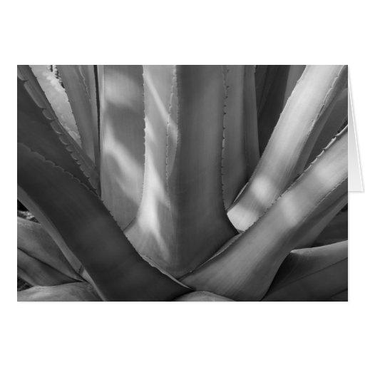 Tarjeta de felicitación blanco y negro de la plant