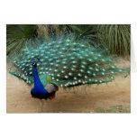 Tarjeta de felicitación bonita del pavo real