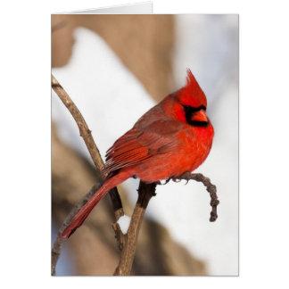 Tarjeta de felicitación cardinal