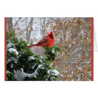 Tarjeta de felicitación cardinal de la naturaleza