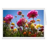 Tarjeta de felicitación - cielos floridos