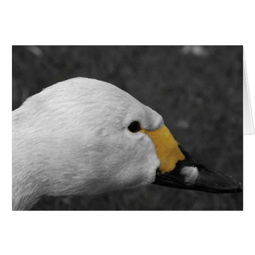 Tarjeta de felicitación - cisne de Bewick