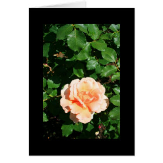 Tarjeta de felicitación color de rosa anaranjada d