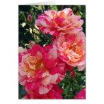 Tarjeta de felicitación color de rosa rayada blanc