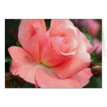 Tarjeta de felicitación color de rosa rosada