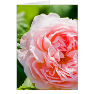 Tarjeta de felicitación color de rosa rosada bonit