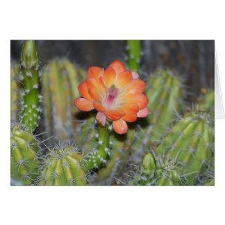 Tarjeta de felicitación con la flor anaranjada del