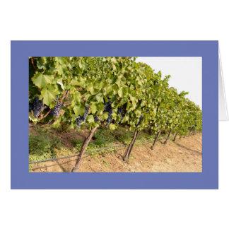 Tarjeta de felicitación con las uvas en viñedo del