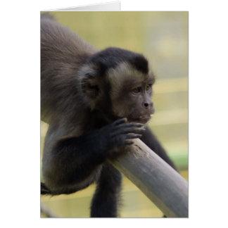 Tarjeta de felicitación copetuda del mono del capu