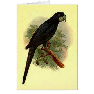 Tarjeta de felicitación de Anadorhynchus Purpurasc
