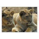 Tarjeta de felicitación de Cubs de león