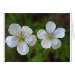 Tarjeta de felicitación de dos flores blancas