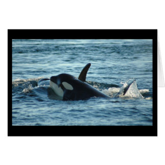 Tarjeta de felicitación de dos orcas