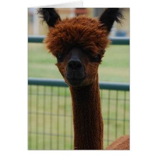 Tarjeta de felicitación de la alpaca de Kuzco