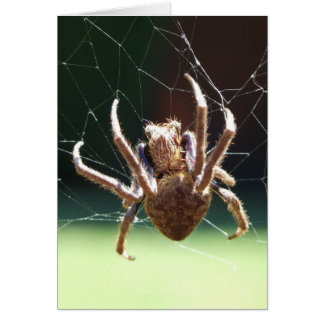 Tarjeta de felicitación de la araña del tejedor